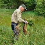 """Spontaneinsatz zu dritt (!) auf einer Wiese im Naturschutzgebiet """"Erlenwiesen von Ober-Roden"""". Bei unserer Ankunft hatten bereits 6 Jäger mit 3 Hunden die Wiese zu ¾ abgegangen, da sie ½ Std. vorher angefangen hatten. Da sie recht weit auseinander liefen, beschlossen wir, die Wiese zusammen mit einem 80jährigen Jäger nochmals abzusuchen. Das Ergebnis ist auf den Bildern zu sehen! Als wir auf den letzten Metern waren, fing der Landwirt bereits an zu mähen..."""